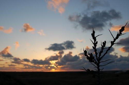 Buckthorn, Ameland