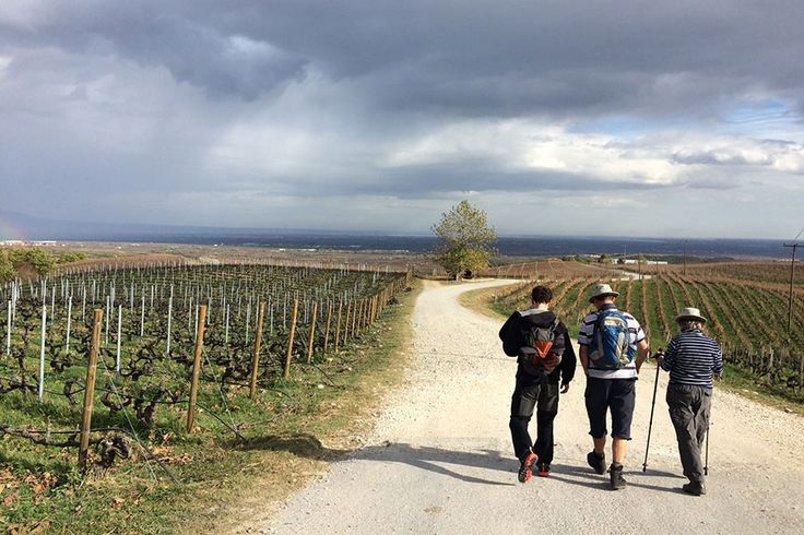 Wine tour in North Greece with Trigiro - Nice winery, vineyards and walking paths - #wine #tours #NorthGreece