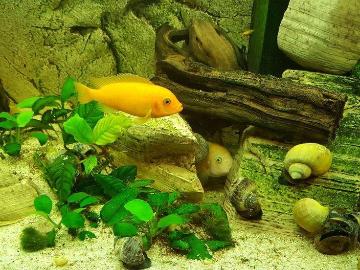 Aquarium in Prague Drugstore  #prague #travel #aquarium #interior #drugstore #pharmacy #fish #water #galaxys6