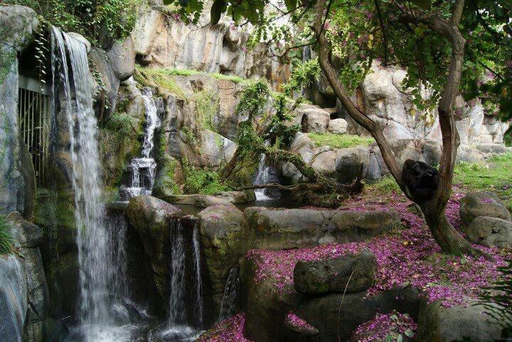 98 Best Busch Gardens Tampa Images On Pinterest Busch Gardens Tampa Bay Roller Coaster And