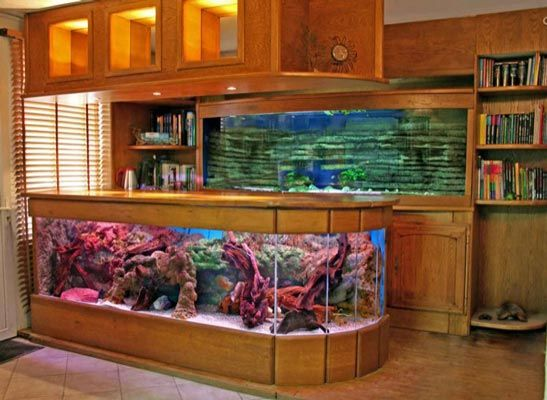 25 best fish tanks images on pinterest fish aquariums for Fish tank bar