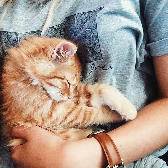оптимальным решением спящий котенок фото на руках российская модель знала
