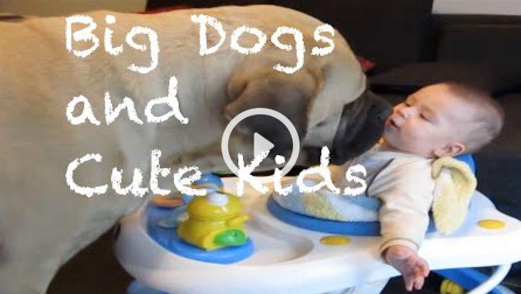 Když jsou společně velcí psi a malá miminka. - Vždy to dopadne nějak takhle!
