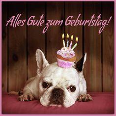 Hunde mit einem Mini-Geburtstagskuchen: Alles Gute zum Geburtstag!