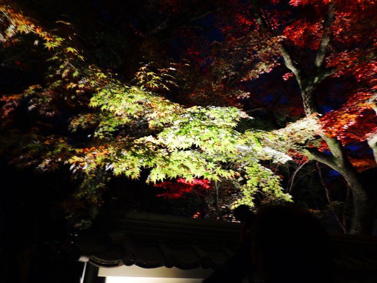 京都永観堂夜のライトアップ。