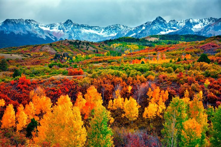 """The aspen tree, shimmering in autumn, is synonymous with Colorado and its namesake town, echoing the old mining cry, """"There's gold in them thar hills."""""""