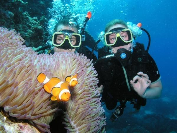 Learn to Scuba Dive in Great Barrier Reef #scubadivercostumes #scubadivingvacations