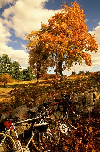 Who's excited for fall bike rides? Photo: Maudsley State Park, Newburyport. Credit: Kindra Clineff