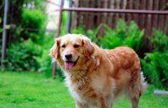 Protégez votre chien des puces et des tiques grâce à ce spray naturel et redoutablement efficace noté 4.5 - 2 votes Le printemps pointe le bout de son nez. C'est une bonne nouvelle pour vous, mais qui dit printemps dit aussi puces et tiques, et donc acheter toute la panoplie pour protéger votre chien de …