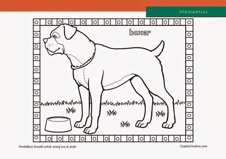 lembar kerajinan anak paud (balita/TK/SD), mewarnai anjing boxer