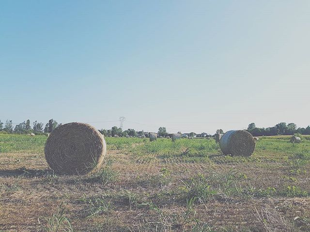 Our neighborhood🌾 #thisishomebnb #summer #field #sunday