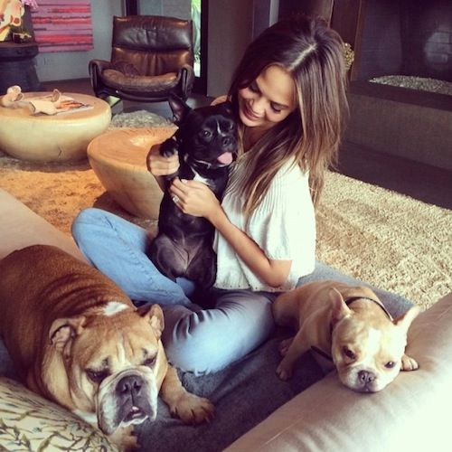 Nikki Reed and Ian Somerhalder Adopt a Kitten — 7 Other Stars Who Love Their Rescue Pets! | In Touch Weekly