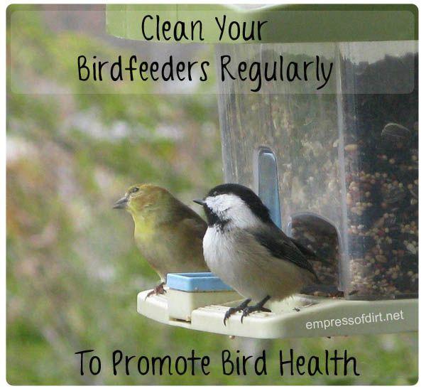 Clean your birdfeeders regularly to promote bird health