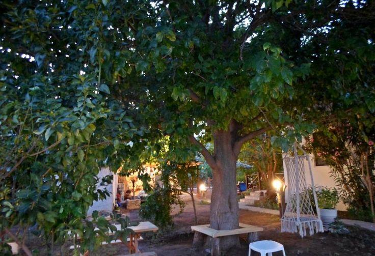 #cirali#ciralihotel #ciralipension #ciralihostels #pension #hostel #lodge #ciralilodge #layover #urav #antalyahotels #antalyapension #antalyalodge #antalya  #mediterranean #chimera #ciraliapart #antalyaapart #bungalow