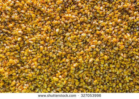 Ripe yellow corn grain - pattern, background