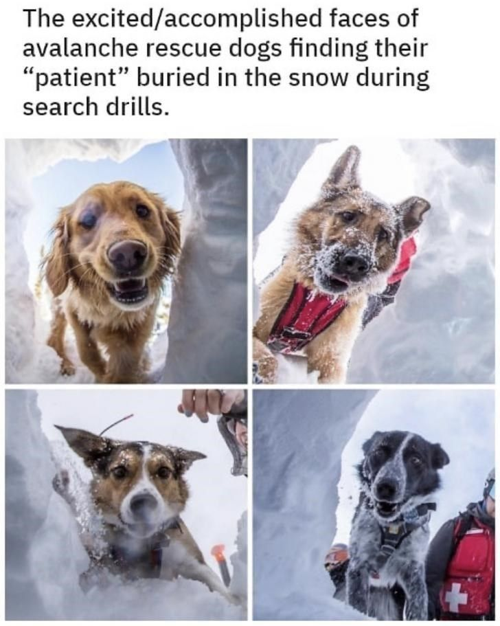 Wholesome Memes And Moments To Restore Some Sanity Funny Dogs
