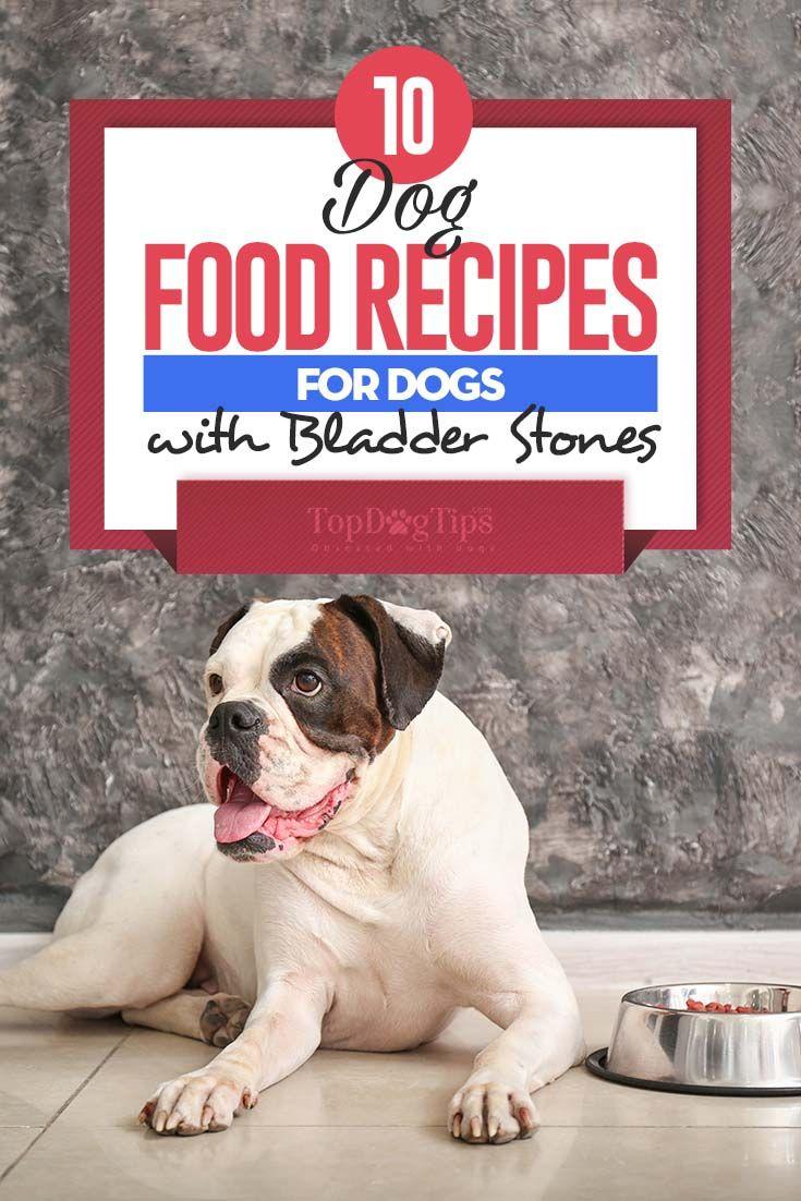 10 Homemade Dog Food Recipes For Bladder Stones Homemade Dog