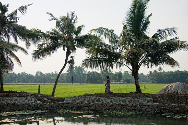 https://flic.kr/p/nR1NiV | Alleppey Backwater, Kerala, Indiat