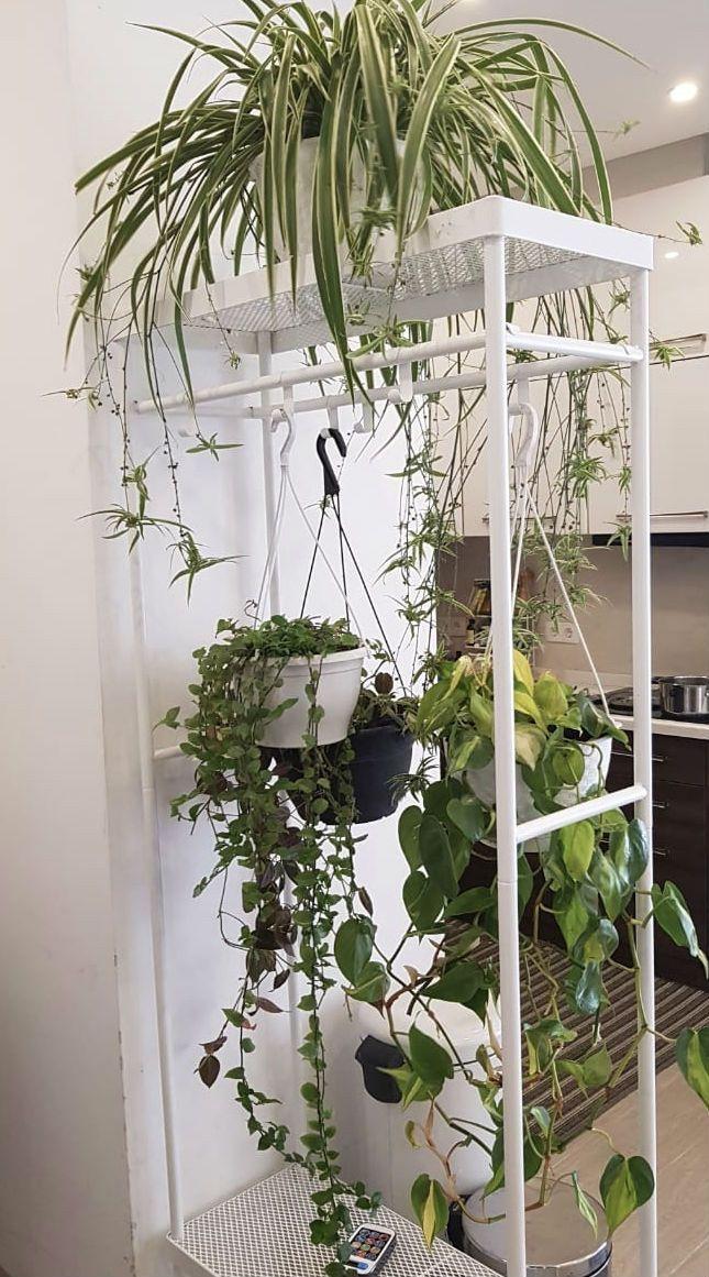 Hanging Plants By Our Entrance Door Inspirational Indoor Garden