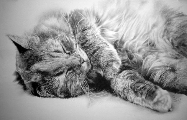 Pencil Drawings of Cats - 01