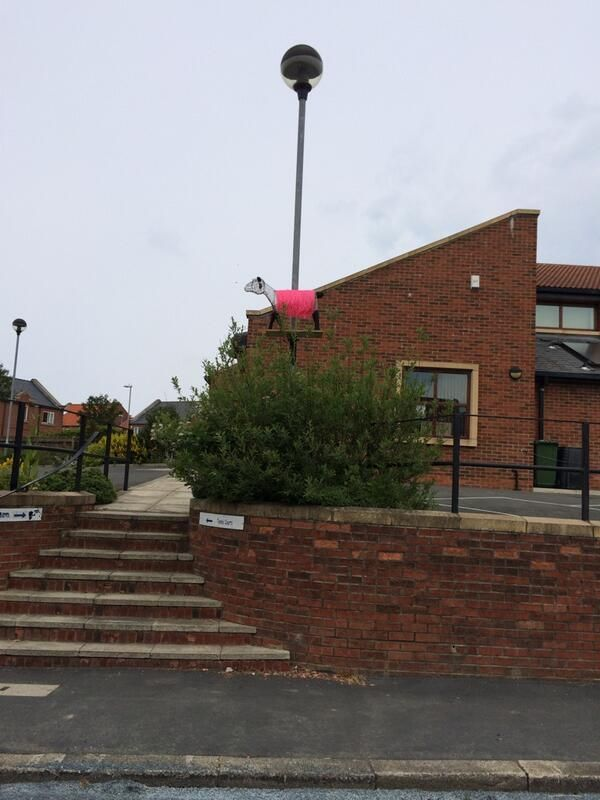 The Wednesday Craft Group created this #PinkSheep out of wire, you'll have found it outside Hinderwell Village Hall.