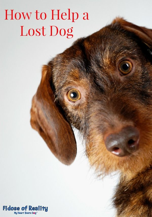 Anyone lose a dogMay 16,20177am This was taken over by pizza hut - lost pet poster template