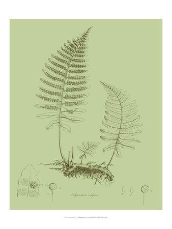 Botanische illustratie Poster bij AllPosters.nl