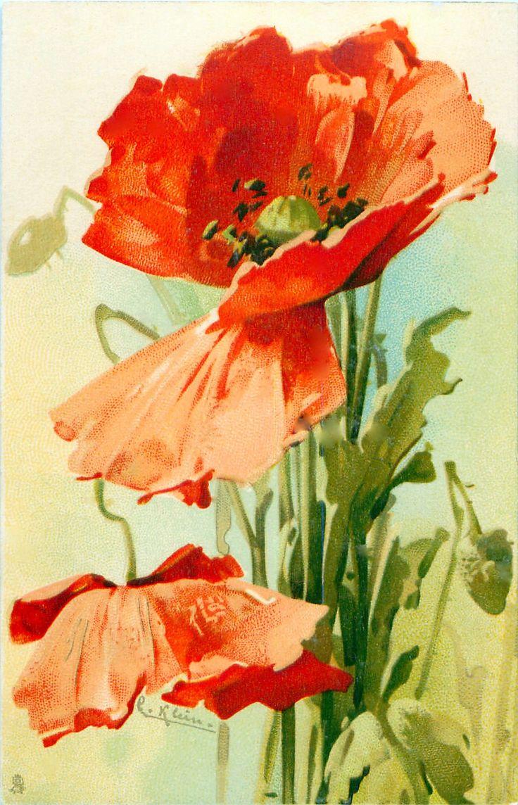Советские открытки с маками, где взять