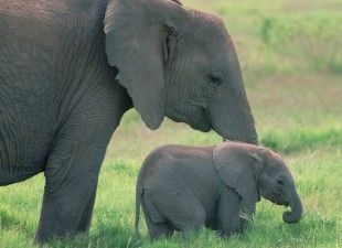 Applaud Wildlife Sanctuary for Rescuing Orphaned African Elephants
