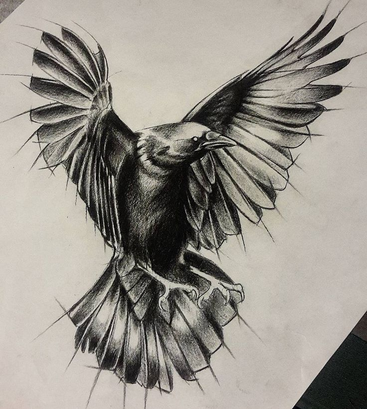 """44 Likes, 3 Comments - Luciano Pezzoli (@notis.compungo) on Instagram: """"This raven design has become available for tattooing. Send me a mail at notis.compungo@gmail.com if…"""""""