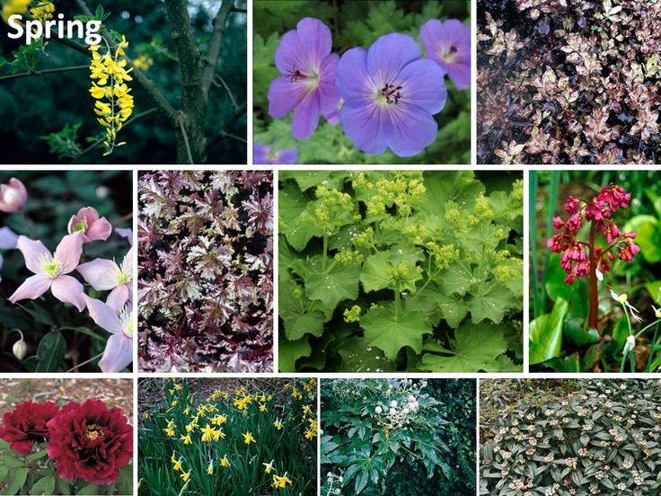 1000 images about low maintenance plants on pinterest for Low maintenance planting schemes