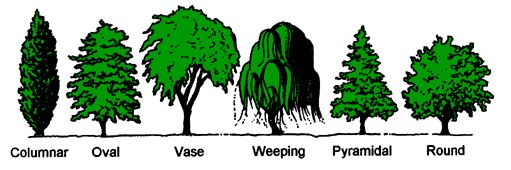 Water Wise Landscaping: Principles of Landscape Design, by Colorado State Univ Extension.