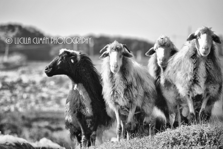 Black sheep....