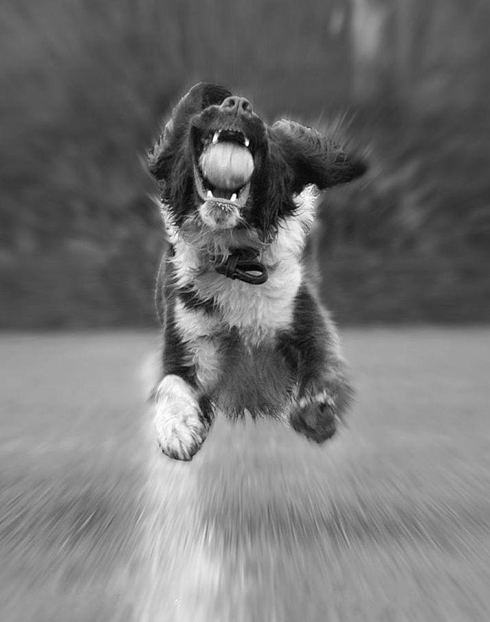 The catch #dog puppy cute