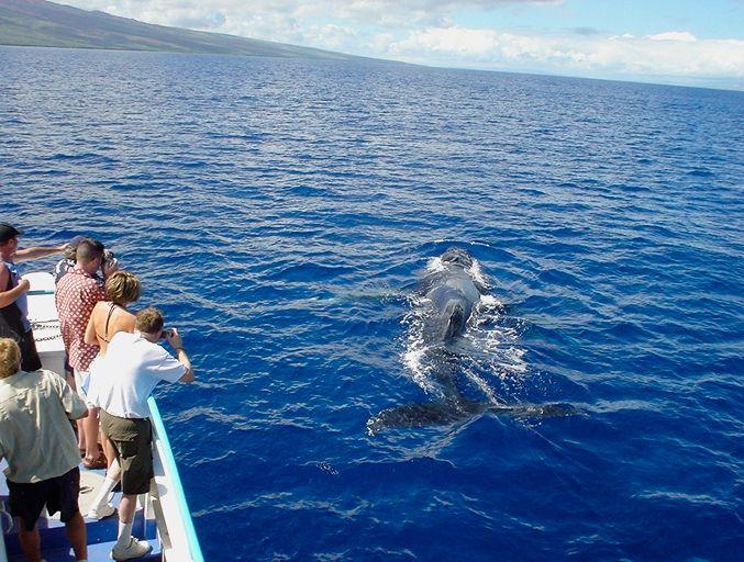 ハワイでホエールウォッチング☆冬のハネムーンのアイデアを集めました♡
