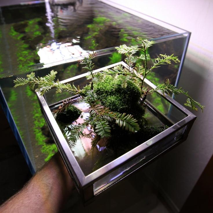 121 best wabi kusa images on pinterest aquatic plants for Garden aquarium design