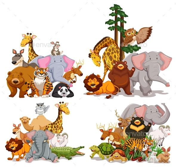 Group of Different Types of Animals