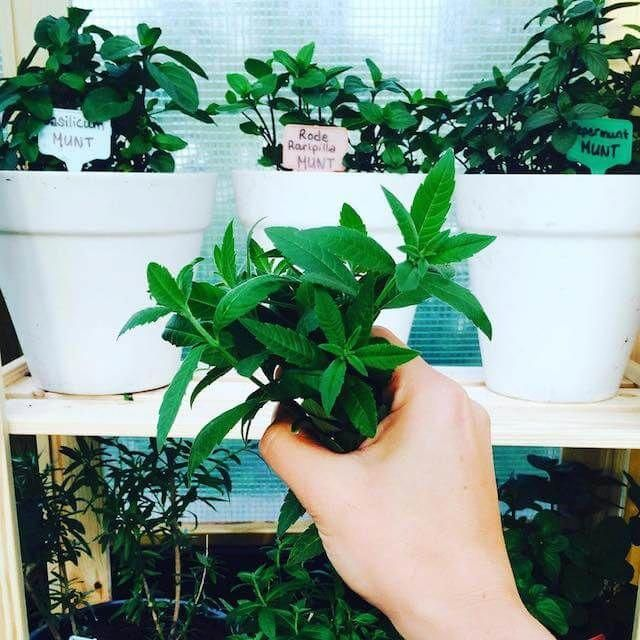 How To Start An Herb Garden For Beginners It's Easy 400 x 300