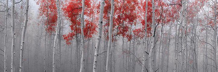 """For sale: Peter Lik """"Scarlet Moods"""""""