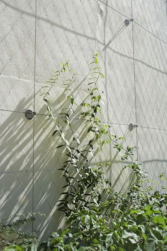 Green facades in small spaces   Tensile Design & Construct Tensile.com.au
