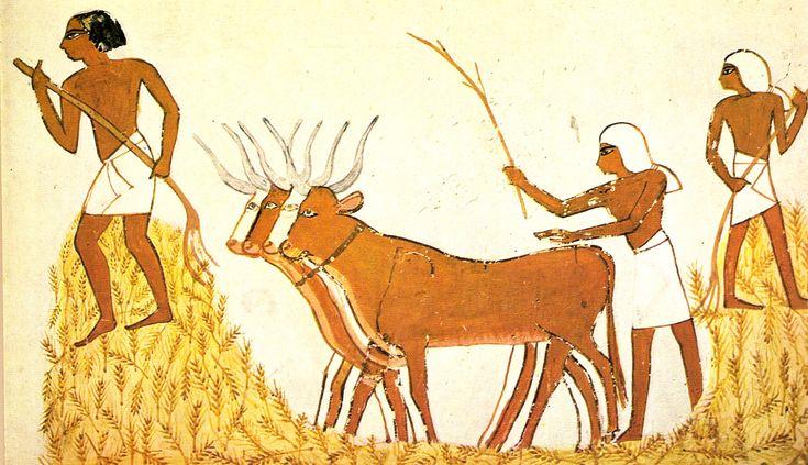 Trilla del trigo en el Antiguo Egipto - History of agriculture - Wikipedia, the free encyclopedia