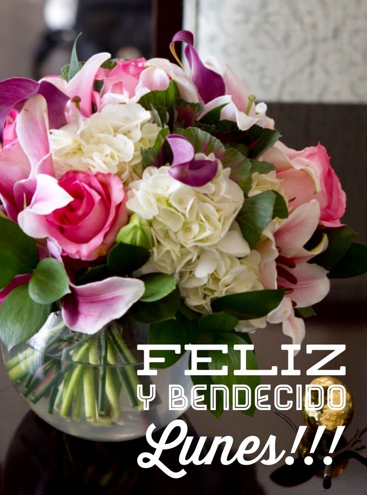 Feliz inicio de Semana / Feliz Lunes / Feliz Semana / Feliz Día / Lunes / Monday / Happy Monday / Happy Day / Que pases un lindo día / Buenos Días / Good Morning / Inicio de Semana /  Happy Week
