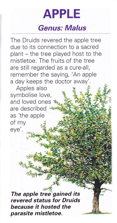 Sacred celtic tree - Apple