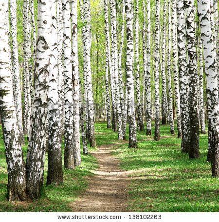 Spring in birch grove by LeniKovaleva, via Shutterstock