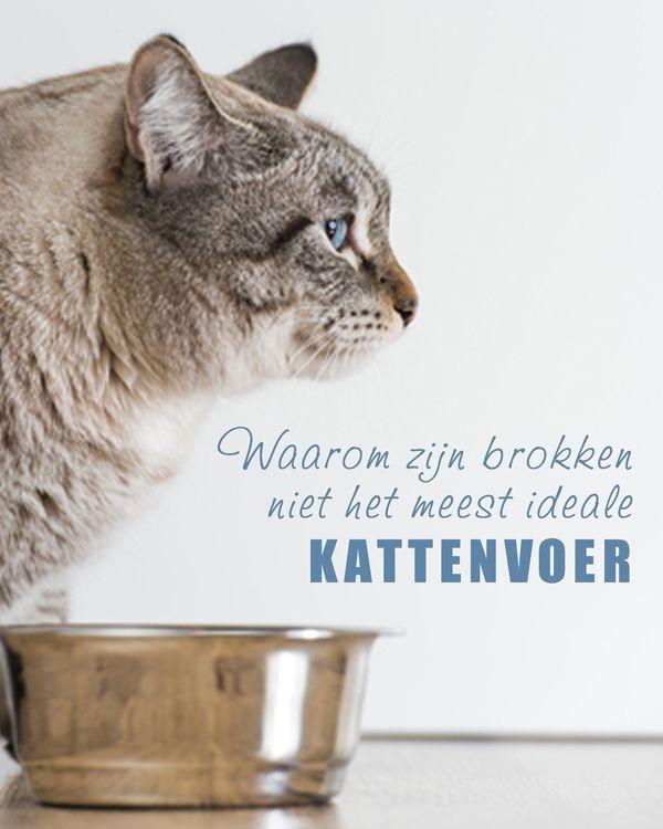 Waarom zijn brokken niet het ideale #kattenvoer. www.voervoorkatten.nl