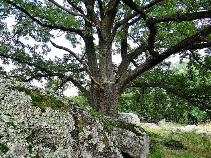 Fák,erdők,parkok.Elbi blogja