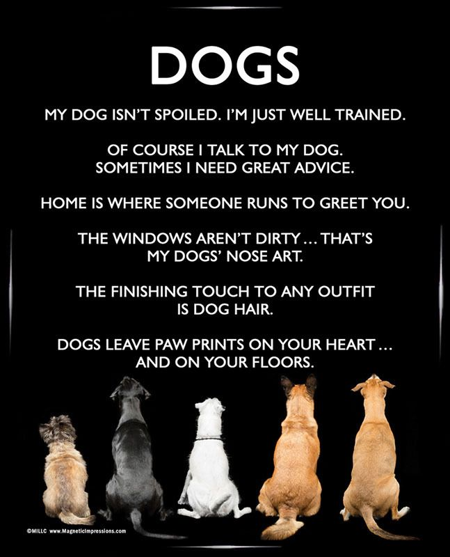 Dogs 8x10 Poster Print. A funny dog poster is the perfect gift for Mother's Day!