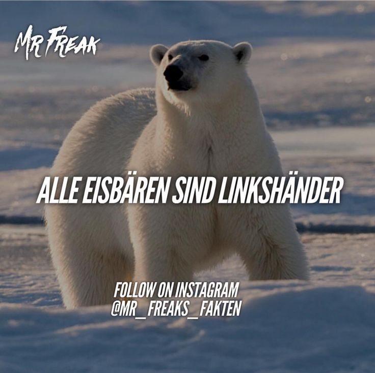 #eisbären