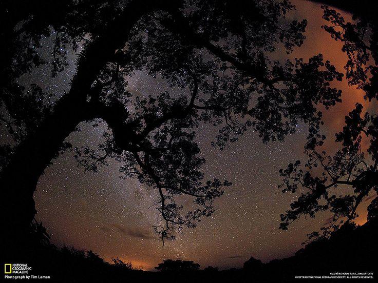 Foresta pluviale vendesi Fotografia di Tim Laman  Il bagliore intenso nel cielo dello Yasuní, catturato con una lunga esposizione, proviene dalle fiammate dei pozzi petroliferi che bruciano gas. Le attività di estrazione incombono sempre più vicine, e minacciano di devastare questo ultimo angolo incontaminato di foresta primordiale.