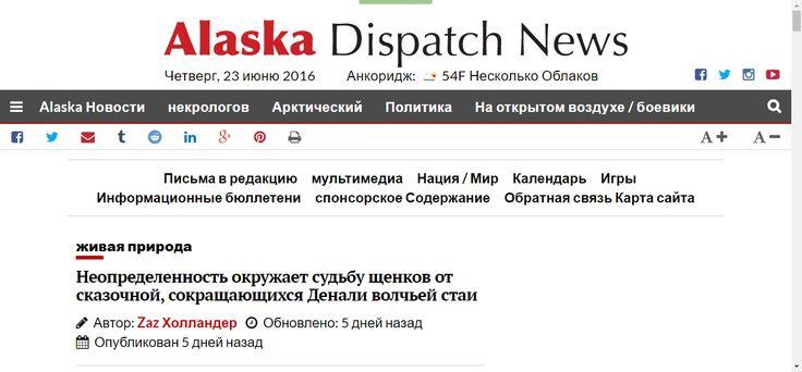 Неопределенность окружает судьбу щенков от легендарное, истощаются Денали волчью стаю - Alaska диспетчерский Новости